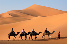 Camel Caravan In The Sahara De...
