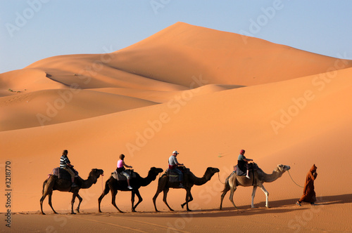 Stickers pour porte Chameau camel caravan in the sahara desert