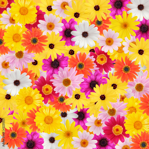 Foto-Stoff - colorful daisy background (von Acik)