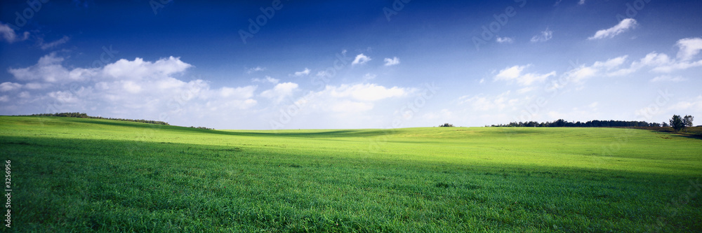 Fototapety, obrazy: russia summer landscape - green fileds, the blue sky and white c