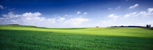 Russia Summer Landscape - Green Fileds, The Blue Sky And White C