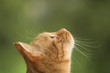 Leinwandbild Motiv cat is looking straight up