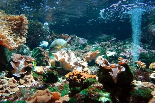 Foto-Kissen premium - poisson dans aquarium (von M.studio)