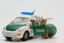 Polizistenschnecke