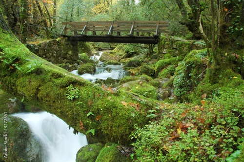Fotografie, Obraz  the bridge