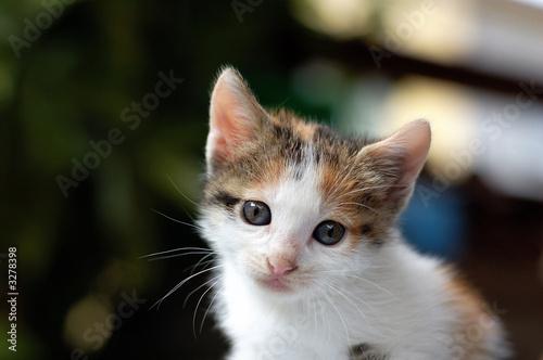 Fototapeta gattina