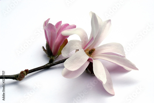 Recess Fitting Magnolia magnolia blossom