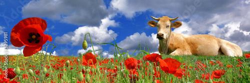 Poster de jardin Vache la vache et les fleurs
