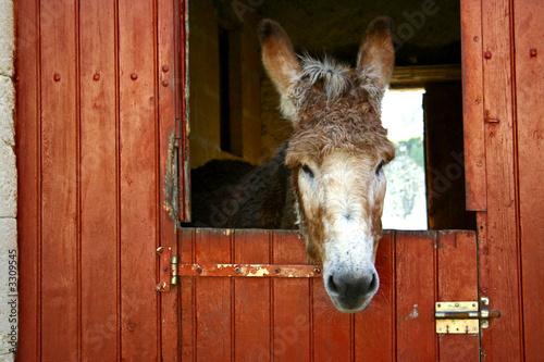 sweet donkey Fototapet