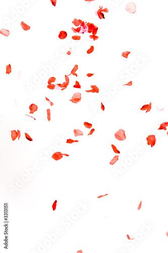 Fototapeta petals