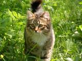 Kotek w zielonej trawie