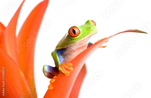 Tuinposter Kikker frog on a plant
