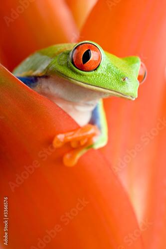Fototapeta frog in a plant