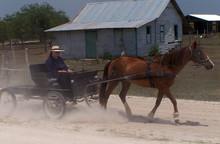 Mennonites Of Belize.