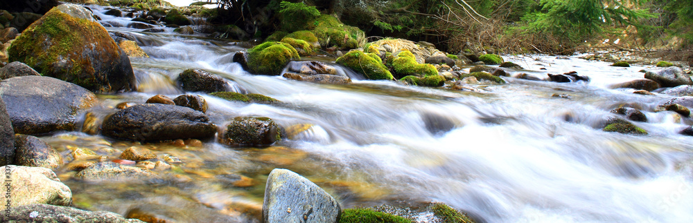 Fototapety, obrazy: Beautiful brook