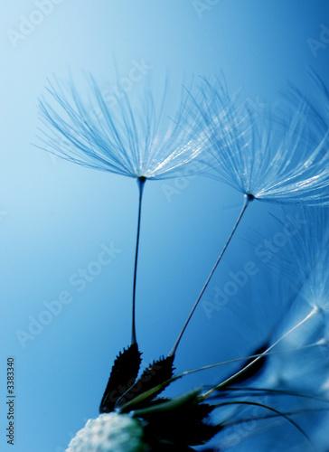 Foto-Duschvorhang - pusteblumenschirmchen
