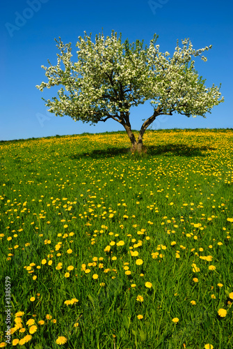 Foto-Stoff - landscape with apple tree (von Bronwyn Photo)