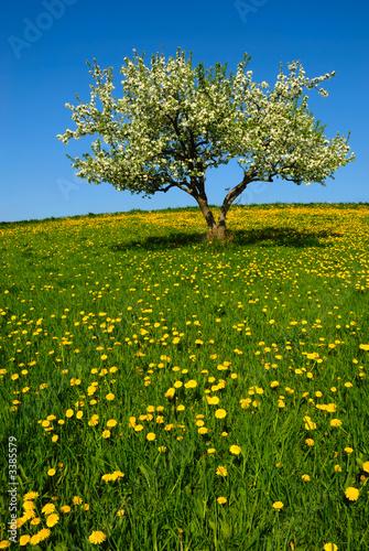 Foto-Kissen - landscape with apple tree