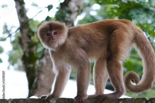 monkey closeup Canvas Print