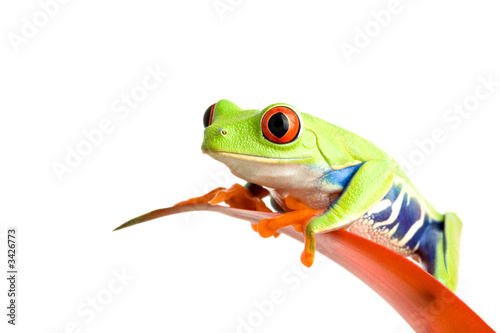 Tuinposter Kikker frog on guzmania