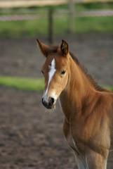 one sweet foal.