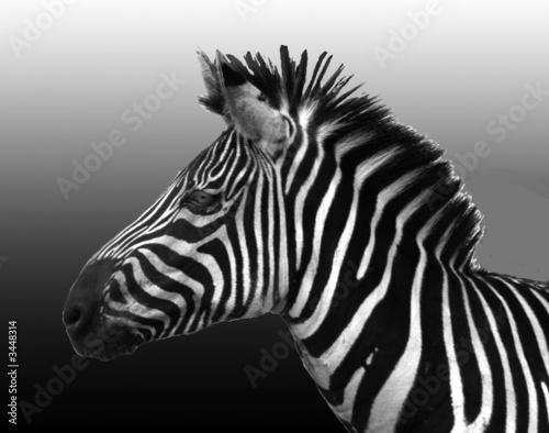 Door stickers Zebra stripes