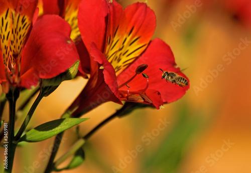 Valokuva bees and flowers #1