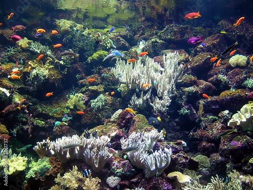 Fotografie, Obraz  mondo subacqueo