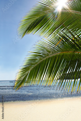 Foto-Plissee - palm tree paradise (von Kelly Young)