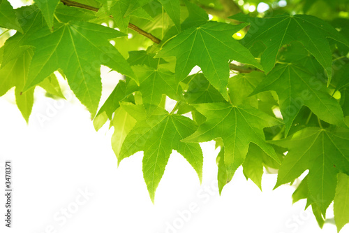 Foto-Stoff - green leaves (von Lvnel)