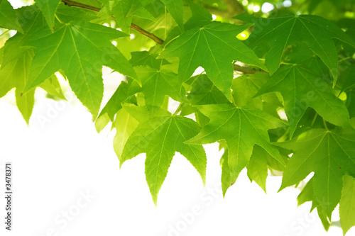 Doppelrollo mit Motiv - green leaves