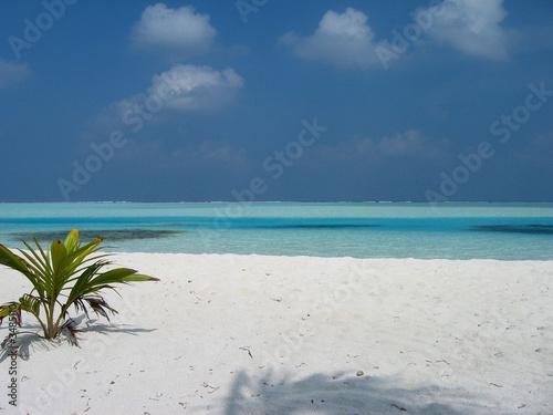 Spoed Fotobehang Eiland am strand