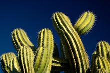 Green Cactus - Blue Sky