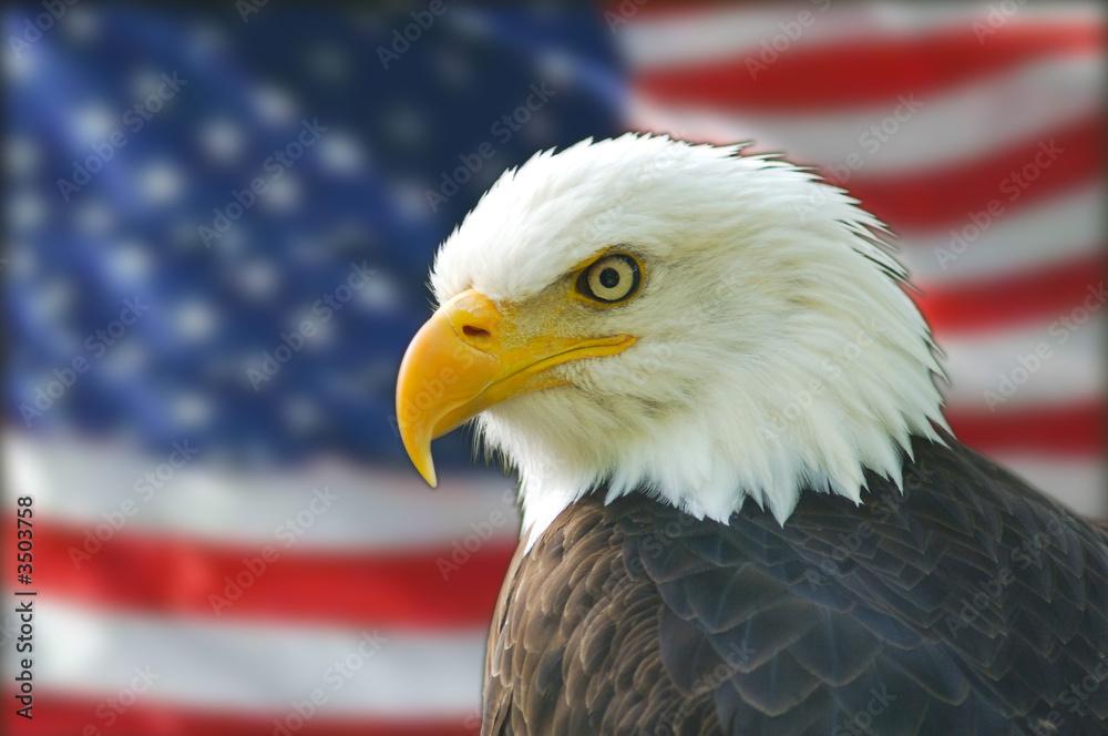 american bald eagle flag