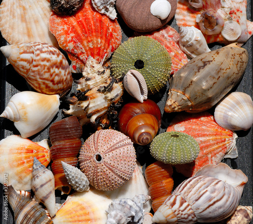 Canvastavla sea shells