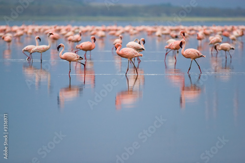Fotobehang Flamingo flamingos