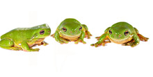 Three Frogs In A Row