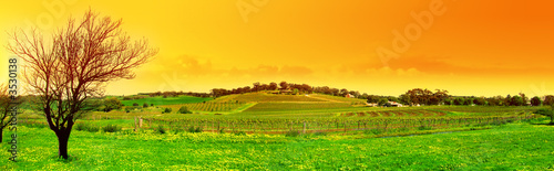 Poster Melon fresh vineyard panoramic