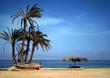 palms, beach and men