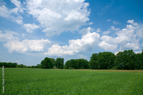 Photo Stands Cow Summer Landscape