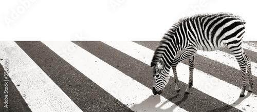 In de dag Zebra Zebra beim Herumstreifen