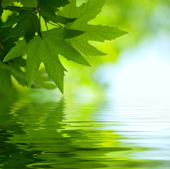 Fototapeta green leaves reflecting in the water, shallow focus