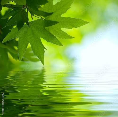 Foto-Kissen - green leaves reflecting in the water, shallow focus