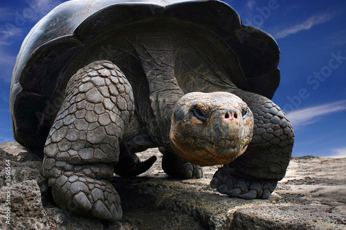 Spoed Foto op Canvas Schildpad Gorgeous turtle