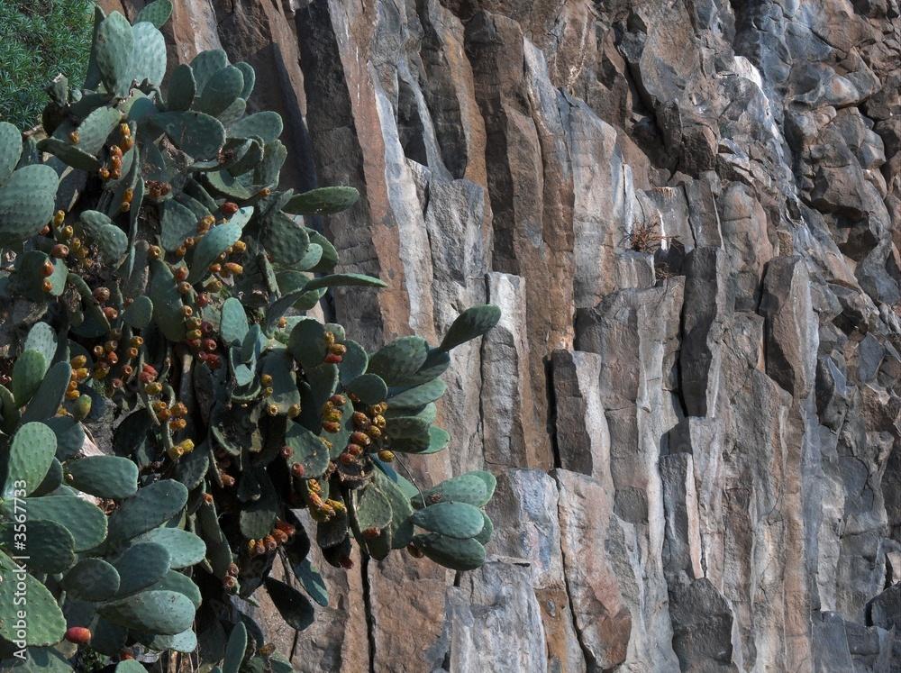 Fényképezés  basalto colonnare