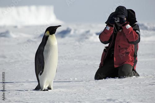 Deurstickers Pinguin Penguin photos
