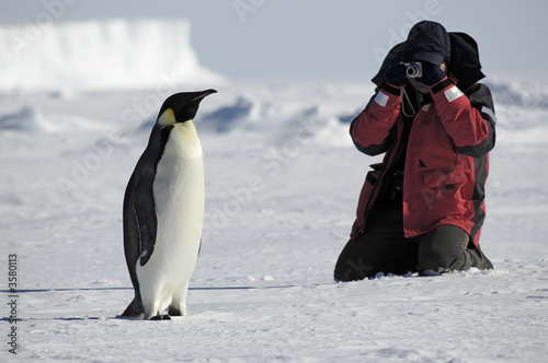 Staande foto Pinguin Penguin photos