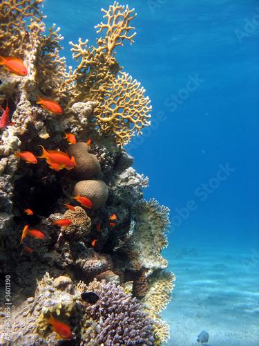 Foto op Canvas Koraalriffen Coral Reef Scene