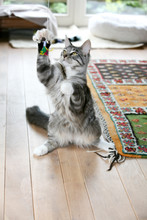 Cute Cat Trying To Catch