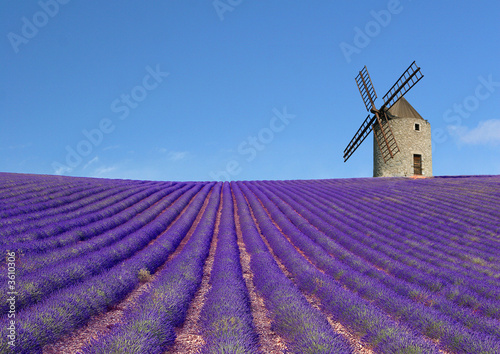Door stickers Lavender Moulin et champs de lavande